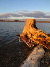 Photo: Sunset sunlight on an old stump over the lake at Eastwood Park in Dayton, Ohio.
