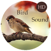Bird Sounds - Relax and Sleep