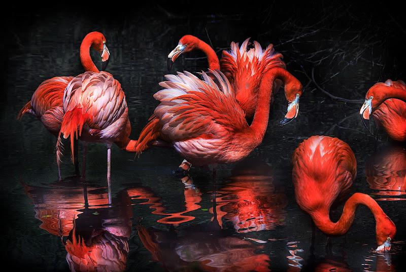 Flamingos rojos di davide_giovanni_volpi