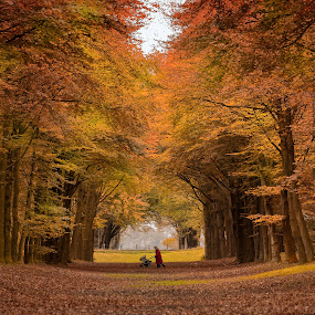 Autumn in Netherlands by Maria Alexandra Abrunhosa - Landscapes Forests ( leaves, walking, baby, autumn, forests,  )