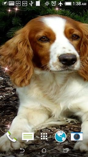 Cute Puppy HD Live Wallpaper