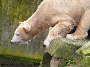 Photo: Knut verschafft sich einen Ueberblick ;-)