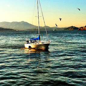 The Bay  by Abi Gilson - Novices Only Landscapes ( bay, boats, reflections, sea, summer, ocean, boat, san francisco, birds )