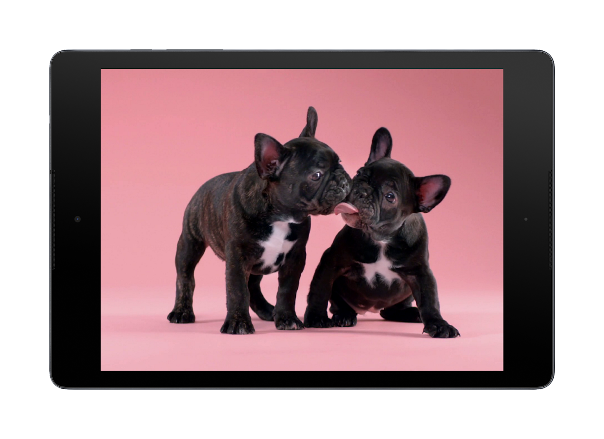 Lucu Anak Anjing Wallpaper Apl Android Di Google Play
