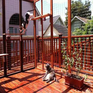 Design Cage Cat - náhled