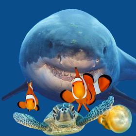 Fish Eat Fish 3D