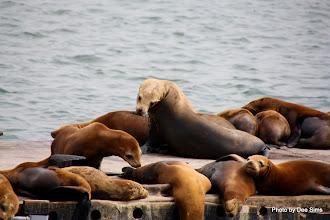 Photo: (Year 3) Day 20 - Seals Sunbathing #3
