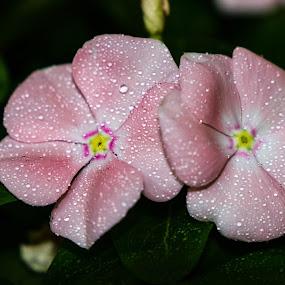 by Christa Ehrstein - Flowers Flower Gardens (  )