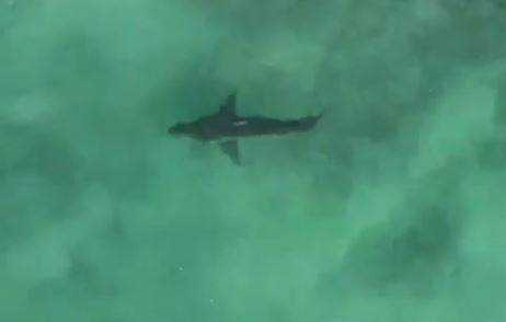 An international surfing competition at Jeffreys Bay was halted when a shark was spotted on July 5, 2018.
