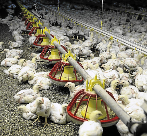 Blow: A chicken farm in Bapsfontein, Gauteng. Hundreds of thousands of chickens have been culled due to outbreaks of avian flu virus in five provinces. Picture: SUPPLIED