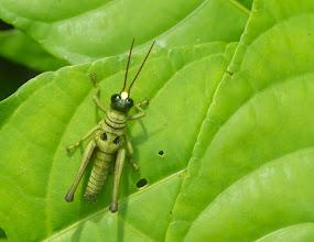 Photo: Cricket