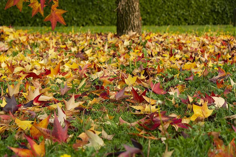 Colori d' autunno di Bibanto