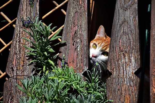 Gatto Nascosto di MersaPhotography