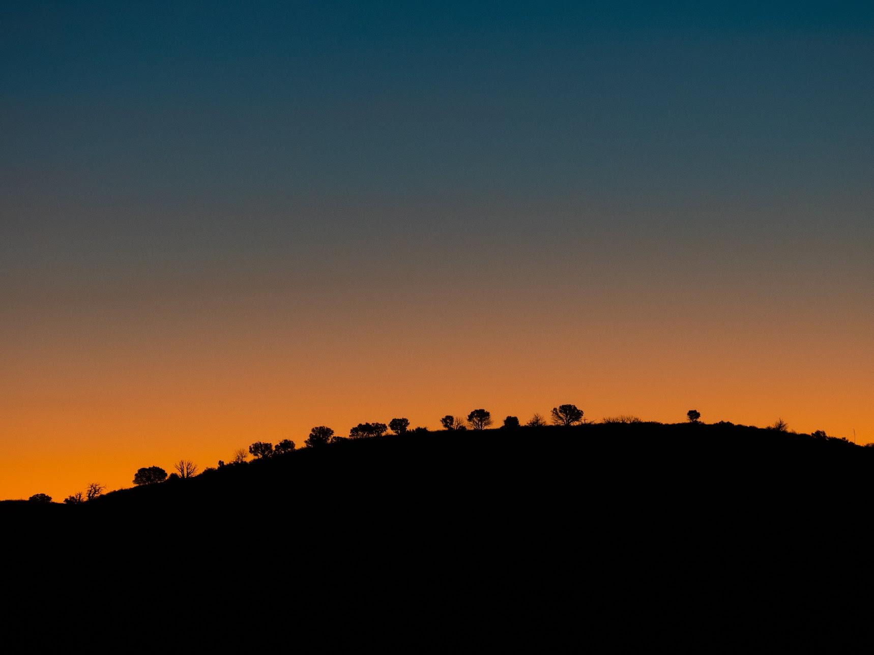 Sunrise over trees