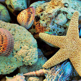 Treasures From The Sea by Terry Davey - Artistic Objects Other Objects ( shells, starfish )