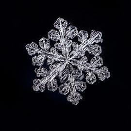 Snowflake 2 by Nitescu Gabriel - Nature Up Close Other plants ( macros, europe, winter flower, macrophotography, macro flower, macro photography, beautiful, snowflake, romania, macro art, macro, european, winter, ice, snow )