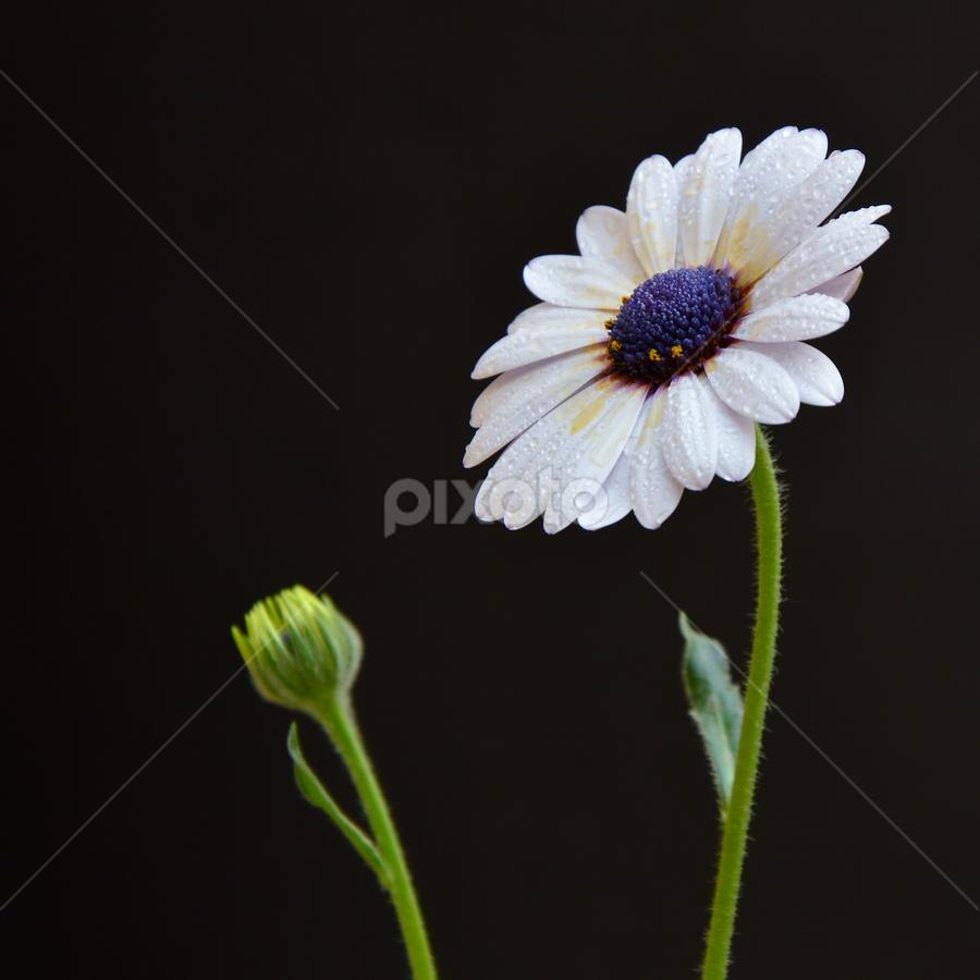 single flora