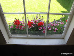 Photo: Window flowers at Kingsland Bay State Park by Ila Sewall