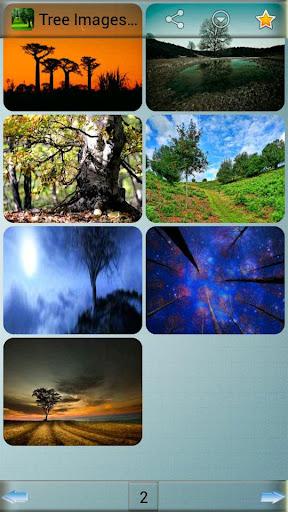 玩娛樂App|ツリー画像と背景免費|APP試玩