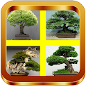 Bonsai Tree Ideas icon