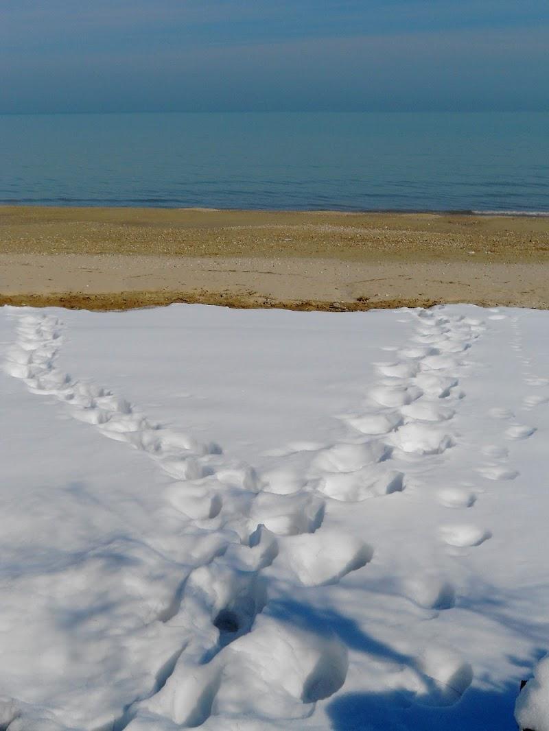 Passi nella neve di Mar955
