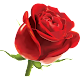 Stickers Roses And Flowers 2020 APK