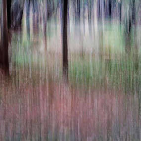 The Woods by Rajarshi Chowdhury - Abstract Patterns ( pwccurves, abstract, wood, pattern, long exposure )
