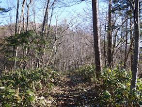 稜線沿いに進む(左上が山頂)