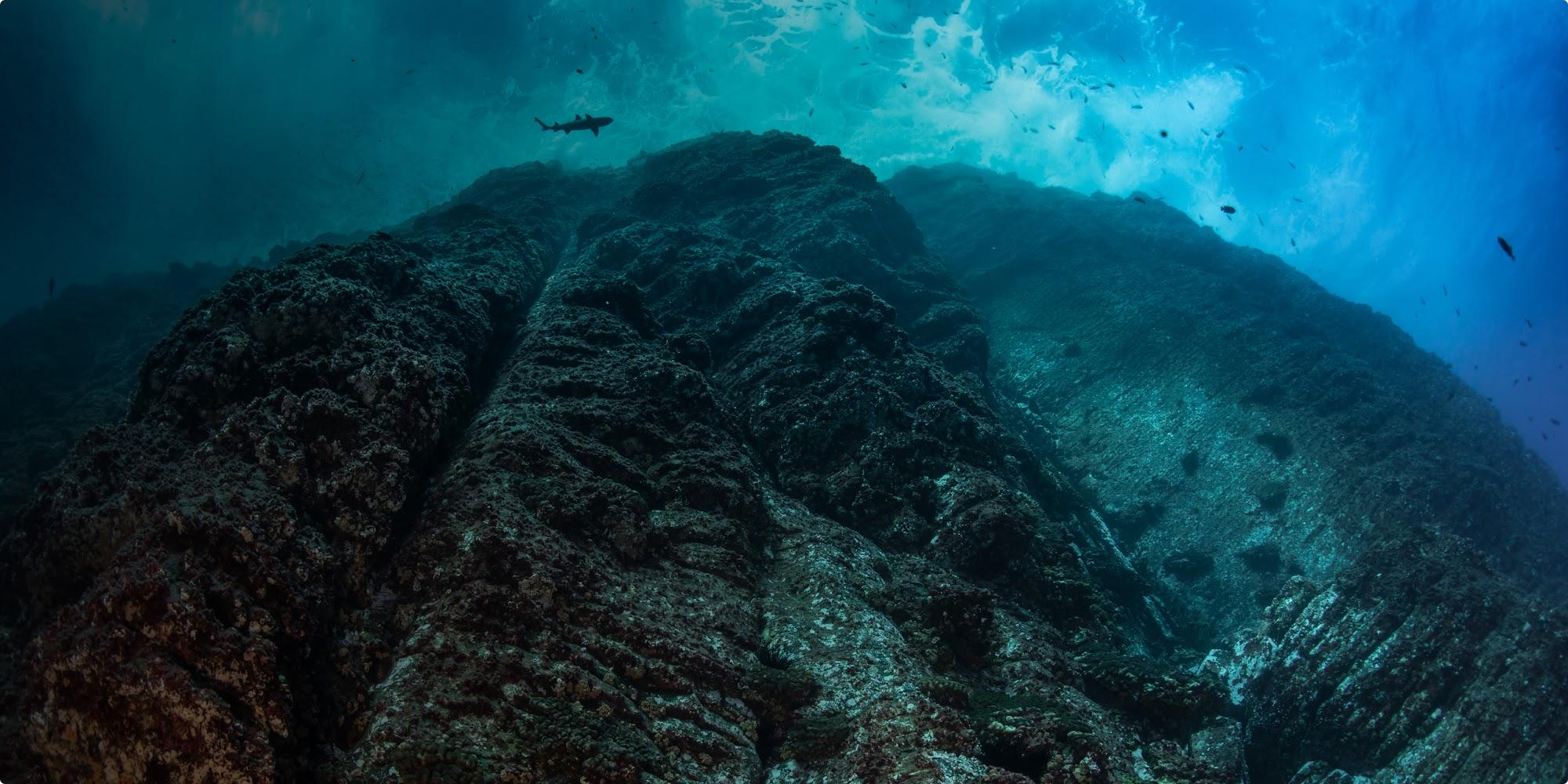 Aufnahme eines Hais und weiterer Fische an einem Riff aus der Froschperspektive