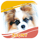 Photo Collection Papillon dog for PC-Windows 7,8,10 and Mac