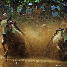 HIDING AMONG THE MUD by Romi Febrianto - Sports & Fitness Rodeo/Bull Riding