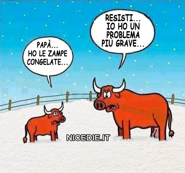 Un toro e il suo piccolo sono in un recinto pieno di neve. Il piccolo di toro dice:
