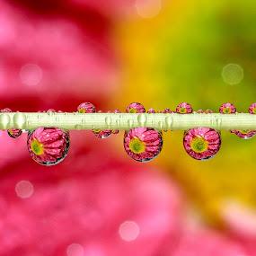 WaterDrops by JL Tan - Abstract Water Drops & Splashes ( water, macro, waterdropd )