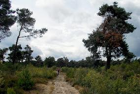 Wandelgebied De Stevenbergen