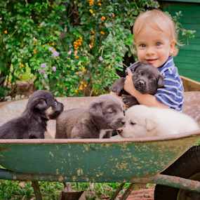 Load of Love by Jason Weigner - Babies & Children Toddlers ( child, dogs, wheelbarrow, outdoor, puppy, baby, smile, toddler, boy,  )