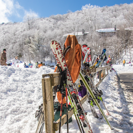 At Ease by Myra Brizendine Wilson - Sports & Fitness Snow Sports ( snow in north caroina mountains, mountain, mountains, north carolina, skiing, beech mountain, nc, snow, skies,  )