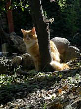 Photo: Rufo 2010