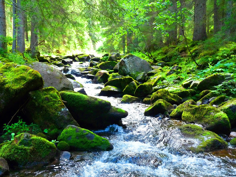 Green Forest.. di angelina