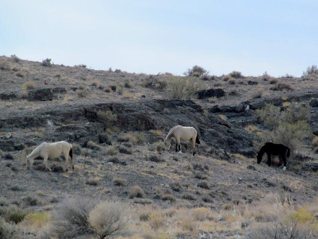 Wild horses near Antelope Spring Reservoir