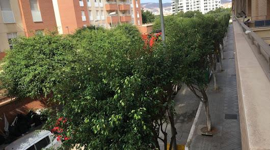 La ciudad cambia su forma de podar los árboles y a los vecinos no les gusta