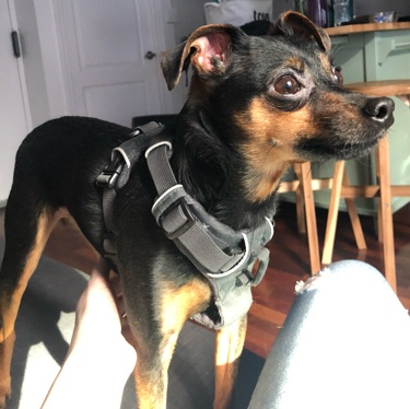 Do you know my owner?, FOUND May 22, 2019