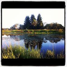 Photo: Tree reflections in the lake #intercer #tree #park #water #lake #reflections #nature #trees #beautiful # blue #green #branch #twilight #scene - via Instagram, http://instagr.am/p/NF7bPGJfjU/