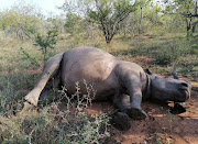 A rhino killed for its horn on a game farm in Lephalale, Limpopo. Police are on the hunt for the poachers who hacked off and stole the rhino's horn
