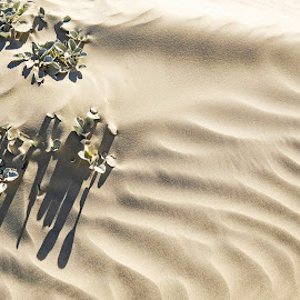 Sand Ripples by Theo Collett - Nature Up Close Sand ( patterns, sand dunes, ripples, wind art, dune vegetation )