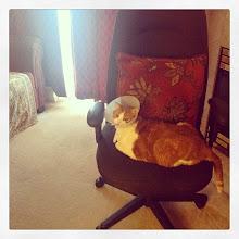 Photo: Does your room need a renovation? #greenyourroom #intercer #pet #pets #cat #cats - via Instagram, http://ift.tt/1khZfJJ
