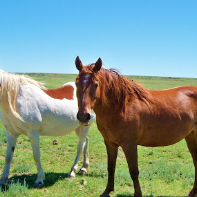 HORSE  BUDDIES by SHARON ARMIJO - Animals Horses ( animals, nature, horses, animal friendships, prairie, , #8rtcoMagazine )