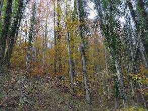 Photo: jesen