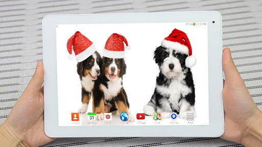 Christmas Dogs Live Wallpaper