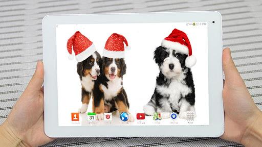 クリスマス犬のライブ壁紙