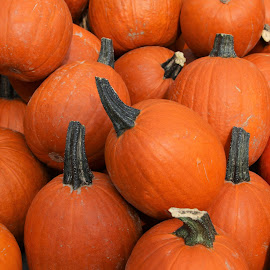 little pumpkins by Carola Mellentin - Food & Drink Fruits & Vegetables ( orange, halloween, fall, fruits, autumn, pumpkin,  )